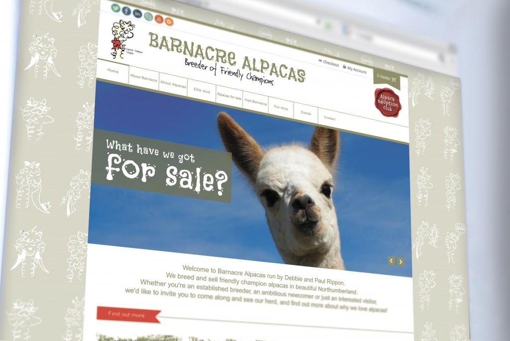 Brand and website for Barnacre Alpacas