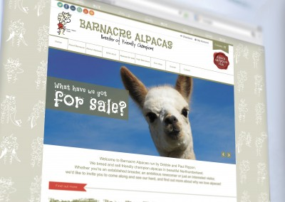 Brand and website for Barnacre Alpacas